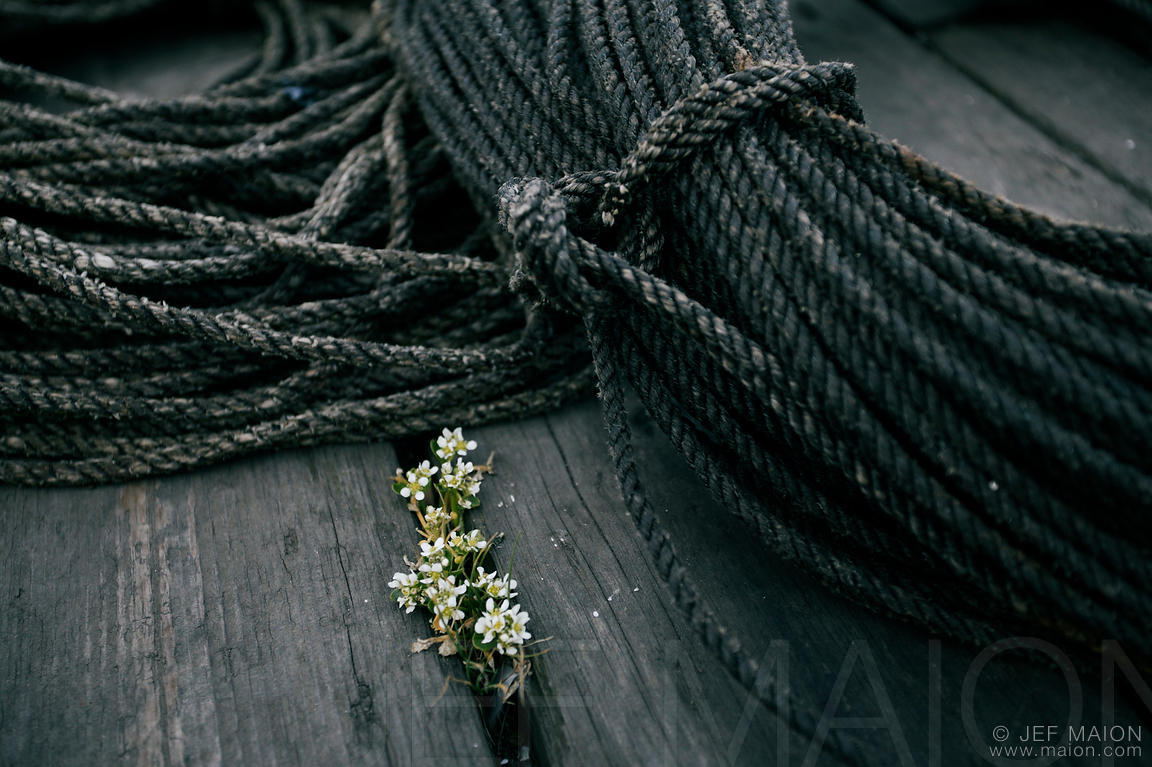 Flowers and rope on wooden pontoon
