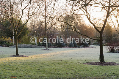 Morning sun on frosted grass in the Winter Garden. Sir Harold Hillier Gardens, Ampfield, Romsey, Hants, UK