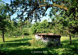 cider apple orchard mordiford near hereford