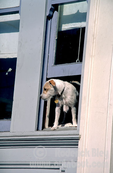 Terrier Watchdog