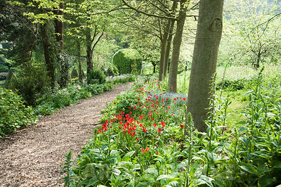 Vivid red Tulipa sprengeri mix with forget-me-nots and white flowered Paeonia emodi below an avenue of oaks. The Old Rectory, Netherbury, Dorset, UK