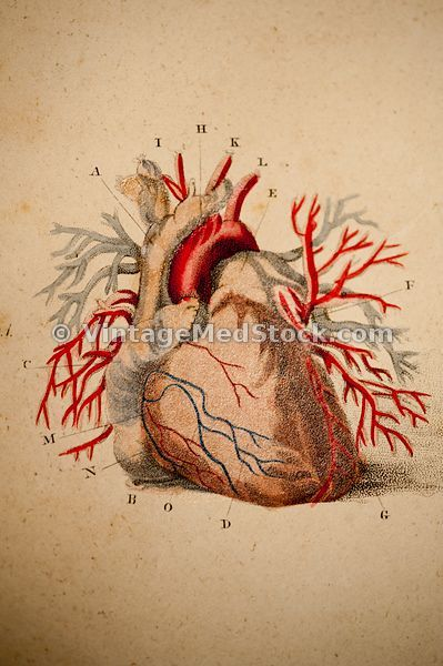 Cardiovascular System images