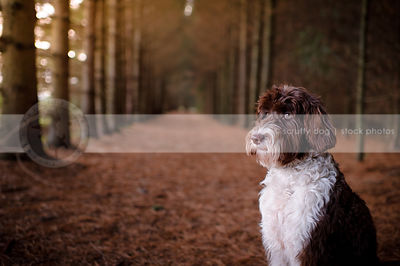 brown and white shaggy dog sitting in tunnel of trees