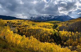 Sea of Aspens | San Juan Mountains, CO