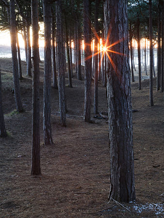 Formby Sunlight and Pines