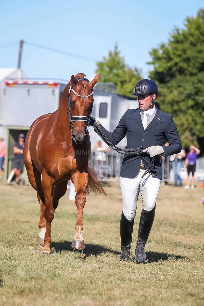 Trot Up CDI classes photos
