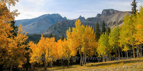 Wheeler Peak Aspens - Great Basin National Park