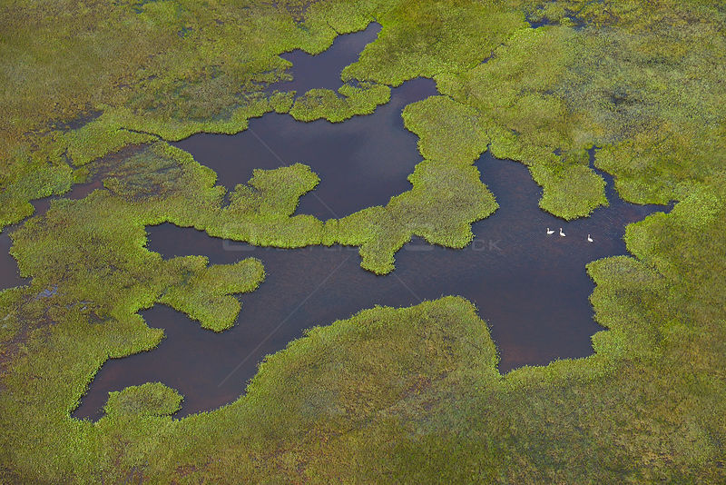 Aerial view of pools of water in peat bog, Sjaunja Bird Protection Area, Greater Laponia Rewilding Area, Lapland, Norrbotten, Sweden, June 2013.
