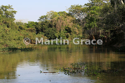 Pantanal creek habitat with gallery forest, River Cuiabá, Northern Pantanal, Mato Grosso, Brazil
