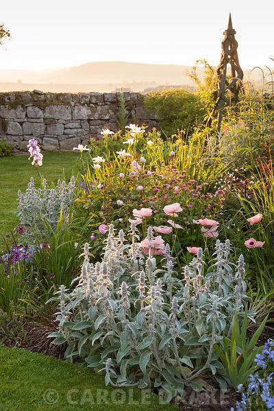 Island bed planted with Stachys byzantina, Allium cernuum, astrantias, irises, Papaver orientale 'Karine' and clematis supported on wooden obelisks. Fowberry Mains Farmhouse, Wooler, Northumberland, UK