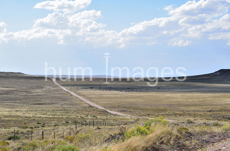 Long gravel road in the grasslands of Colorado.