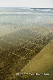 Chesapeake Bay Oyster Beds