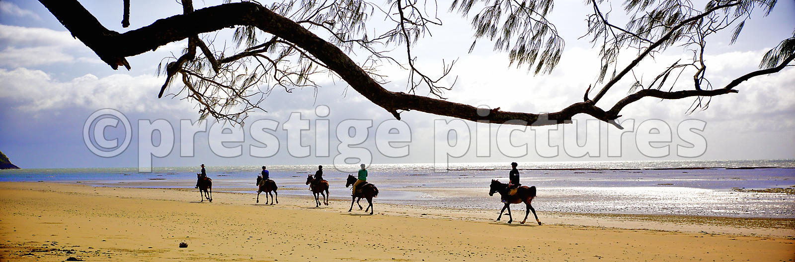 Horse Riders in Silhouette against a Silvery Sea on Myall Beach, Queensland