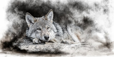 Art-Digital-Alain-Thimmesch-Loup-36