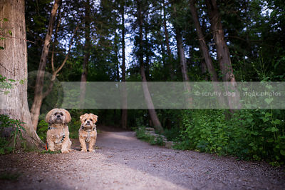 two little dogs together in summer on forest path with trees
