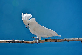 ACutting_bird_0896_copy
