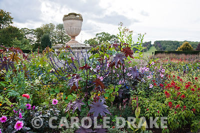 Centre circular bed in the rose garden with urn surrounded by a mass of flowers including amaranthus, dahlias, salvias and ricinus. Ragley Hall, Alcester, Warwickshire, UK