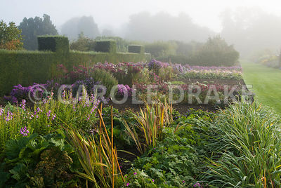 Lines of asters and other herbaceous plants in the stock beds on a misty autumn morning. Waterperry Gardens, Wheatley, Oxfordshire, UK