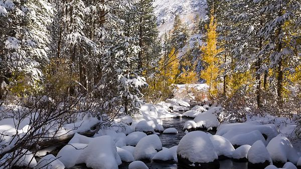 Medium Shot: Gold Trees & A Snowy Mountain Creek