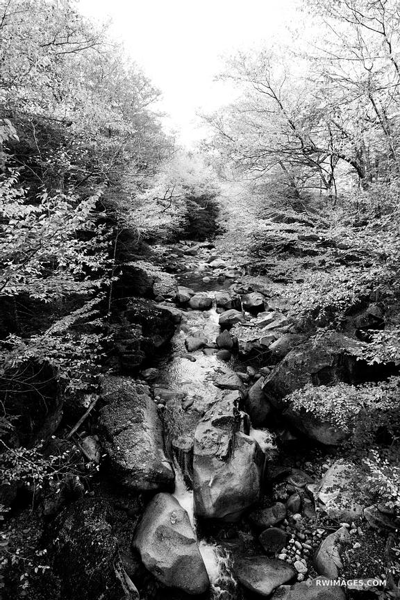 FOREST STREAM FLUME GORGE FRANCONIA NOTCH STATE PARK NEW HAMPSHIRE BLACK AND WHITE VERTICAL