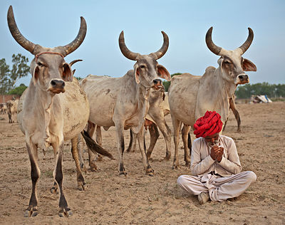 Rajasthan - The cultural Heart of India photos