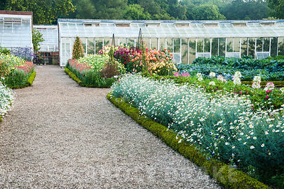 Gravel path through kitchen garden between box edged beds full of argyranthemums and dahlias, with restored glasshouses beyond. Forde Abbey, nr Chard, Dorset, UK