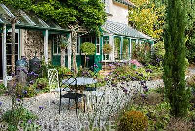 Tables and chairs on the terrace surrounded by Verbena bonariensis, Alchemilla mollis, clipped box and pencil cypresses, Cupressus sempervirens. The Cors, Laugharne, Camarthenshire, Wales, UK