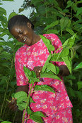 Woman in pink dress tending Mulberry crop on farm, western Kenya Africa