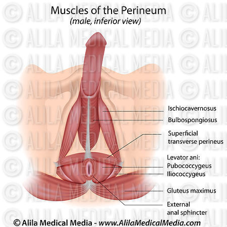 how to build muscle in perineum