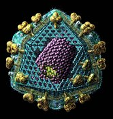 HIV or AIDS virus structure