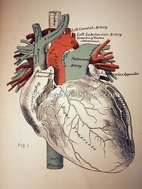 Color Diagram of the Heart