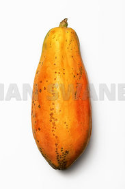 Papaya fruit whole on white