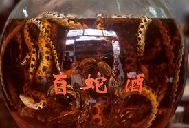 Snakes bottled in Chinese wine for sale in Ancient Street, Tunxi, Anhui Province, China..