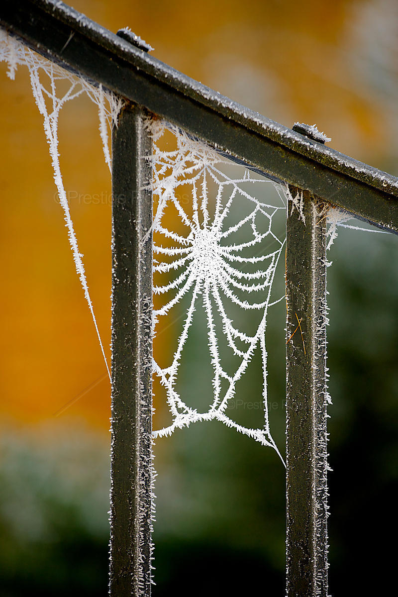 Frosty cobwebs on railings