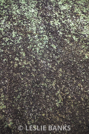 Brown organic stone textured background