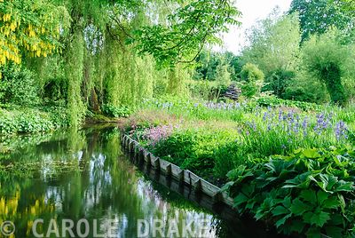 Mill pond framed by plants including irises, rodgersias, ragged robins and tall willows. Westonbury Mill Water Garden, Pembridge, Herefordshire, UK