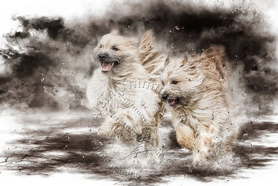 Art-Digital-Alain-Thimmesch-Chien-638