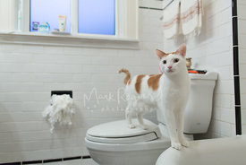 Cat in bathroom on toilet with shredded toilet paper