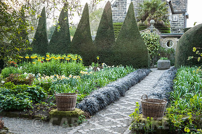 A path of stone setts and gravel in the Canal Garden is framed by black Ophiopogon planiscapus 'Nigrescens' and leads towards a circular window in the potting shed as focal point. Bed in front of tall serrated yew hedge full of crown imperials, Fritillaria imperialis, narcissi and pulmonarias and a pair of wicker baskets frame the path in the foreground. York Gate Garden, Adel, Leeds, Yorkshire
