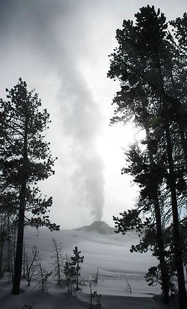 Winter Geyser -  Yellowstone National Park