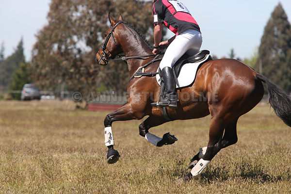Eventing Canterbury Oct 12 2014 photos