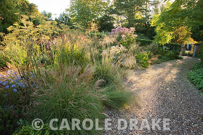 Morning sun illuminates the drive and the gravel garden full of grasses and herbaceous perennials including Stipa gigantea, miscanthus, eupatorium, bronze fennel and Aster x frikartii 'Monch'. Windy Ridge, Little Wenlock, Shropshire, UK