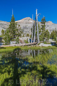 Wet Meadow at Ropi Lake in the Desolation Wilderness