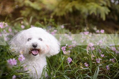 little white fluffy dog sitting in deep flowers