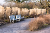 Line of Miscanthus sinensis 'Undine' near the Glasshouse at RHS Wisley.