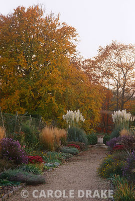 Double herbaceous borders punctuated by asters, sedums and the buff flowerheads of Calamagrostis 'Karl Foerster' in autumn at Kingston Maurward Gardens, Dorset