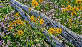 Fencerow_Flowers_Colorado