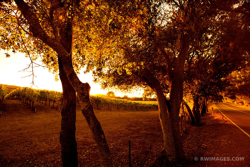VINEYARD COUNTRY ROAD NAPA VALLEY CALIFORNIA SUNSET