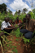 African men listen to an agricultural adviser among undersown maize crop , Kenya , Africa   Demochinm?