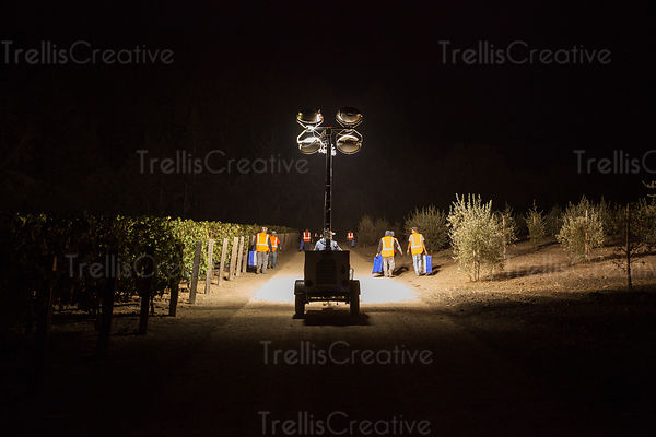 Men going to harvest grapes in the vineyard  at night